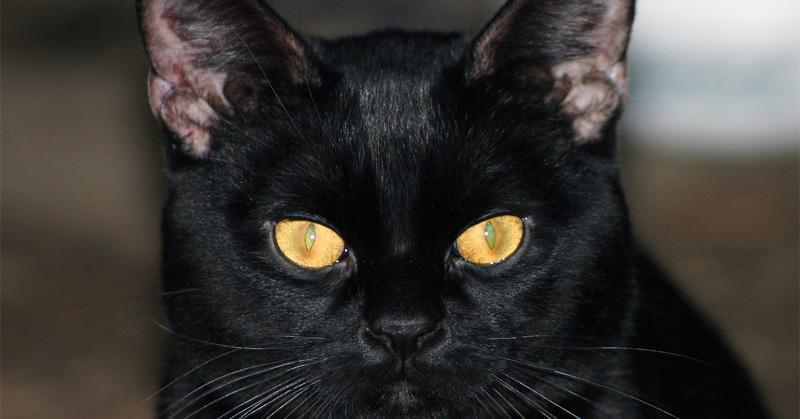 cat-1233048_1280_1